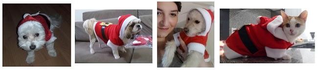 mascotas-papa-noel